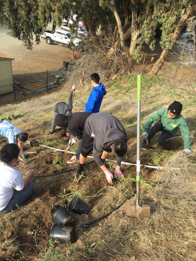 Students+conduct+habitat+restoration+in+the+Baldwin+Hills+Scenic+Overlook.+%28Photo+by+Baldwin+Hills+Greenhouse+Program%29